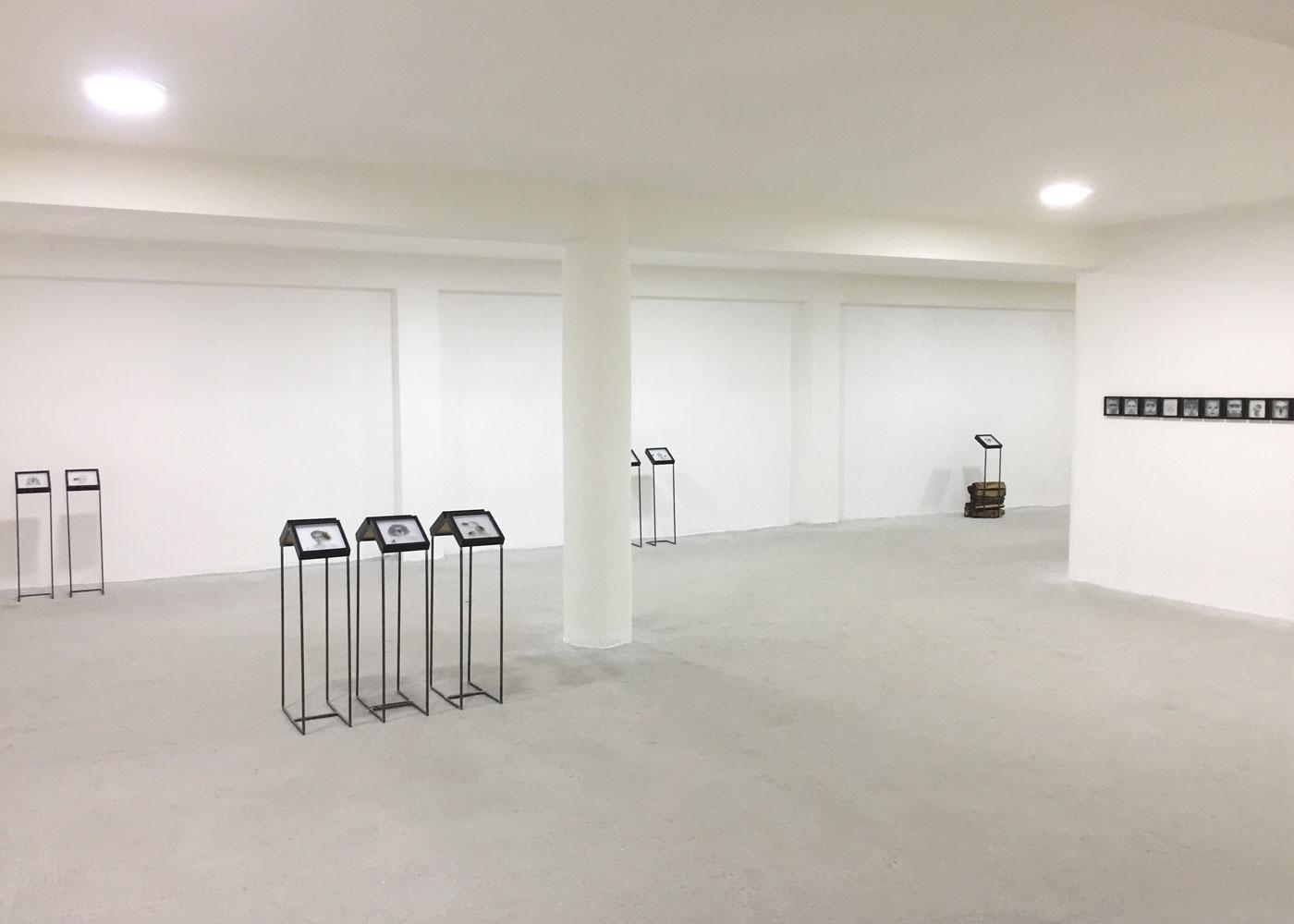BUG (serie in vitro), 2018, installation view